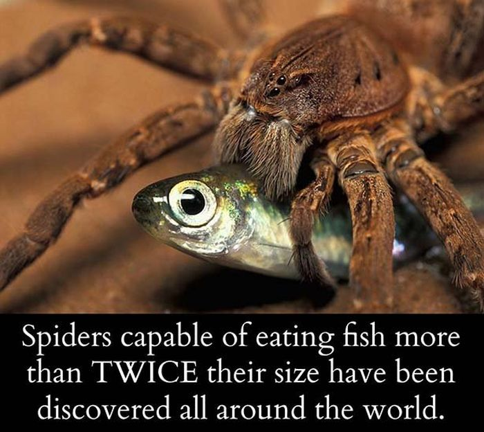 You Need To Know These Science Facts (26 pics)