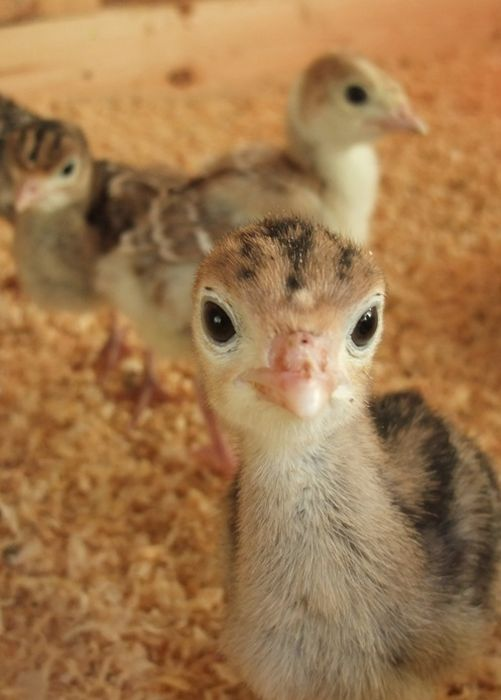 Cool Facts About Cute Animals (26 pics)