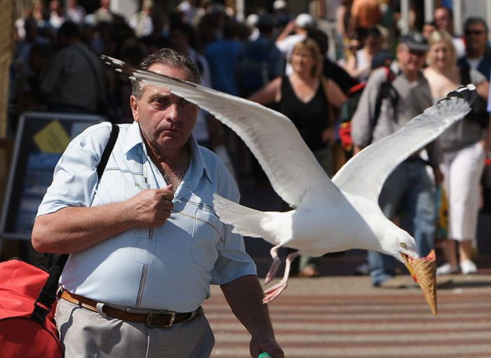 There's Nothing Like A Perfectly Timed Photo (44 pics)
