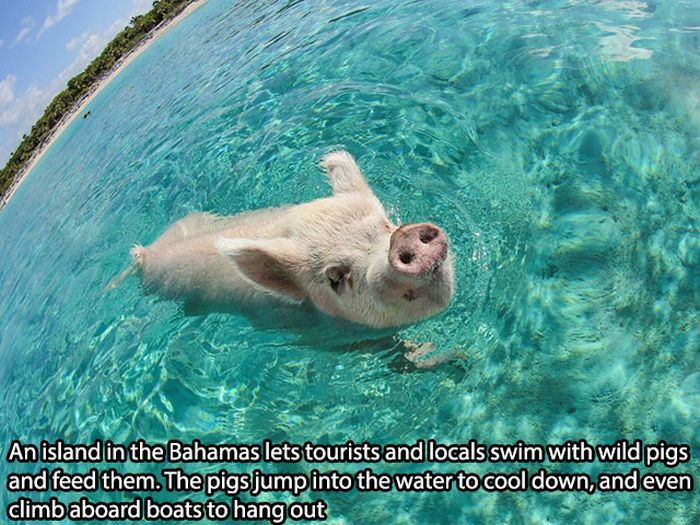 These Facts Will Make You Happy (20 pics)