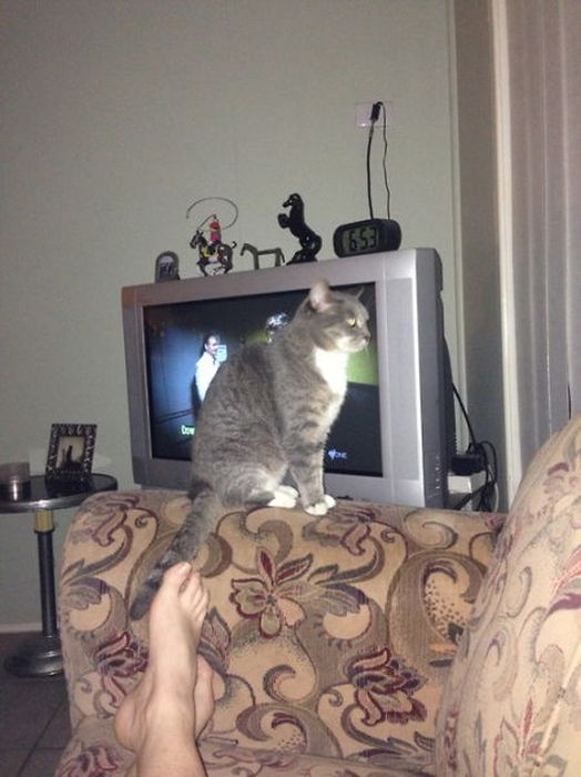 A Cat Will Sit Wherever It Wants To Sit (37 pics)