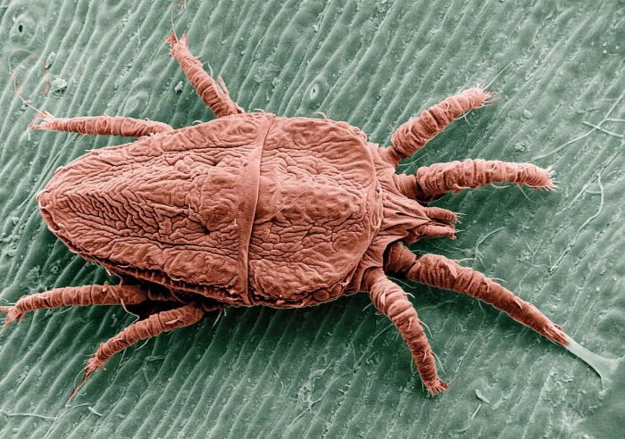 These Creatures Could Be Living In Your House (15 pics)