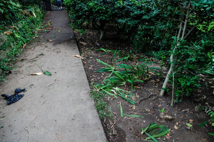 People Destroy Park Looking For Hidden Cash (12 pics)