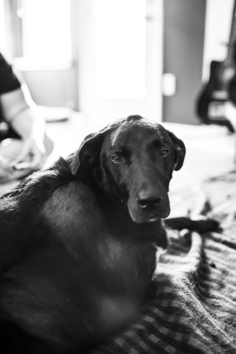 The Story Of Duke's Last Day (23 pics)