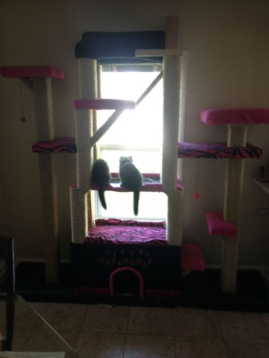 These Cats Are Living The Dream In This Tower (15 pics)