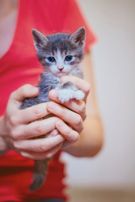 Abandoned Kittens Get Nursed Back To Health (14 pics)