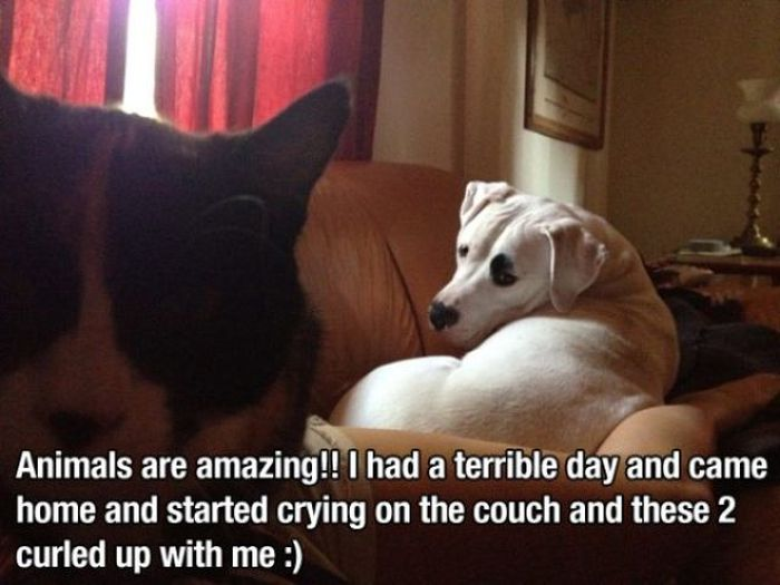 Happy Pics That Are Guaranteed To Make You Smile (46 pics)