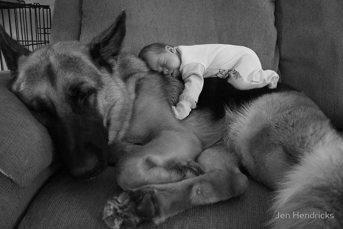 Small Kids Are Safe With Big Dogs (22 pics)