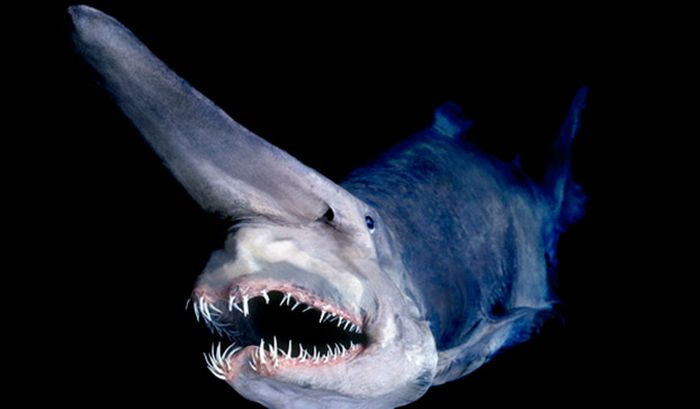 The 12 Most Terrifying Things Living In The Ocean (12 pics)