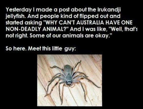 Australia Has A Friendly Spider (3 pics)