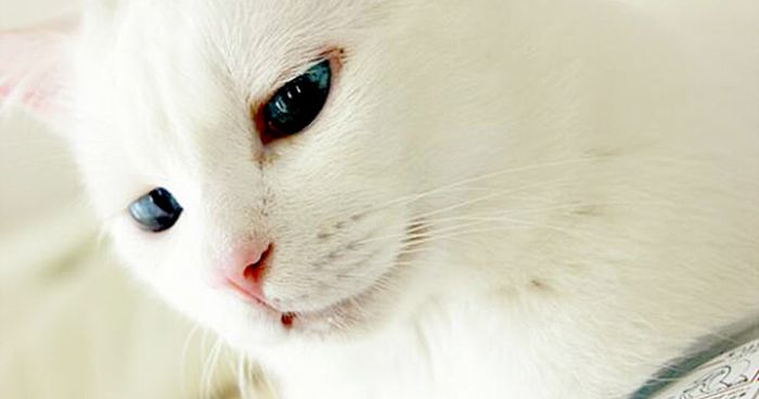 Cat Looks Dead When Taking A Nap (5 pics)