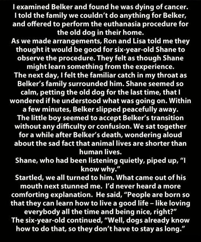 A Dog's Life As Told By A 6 Year Old (2 pics)