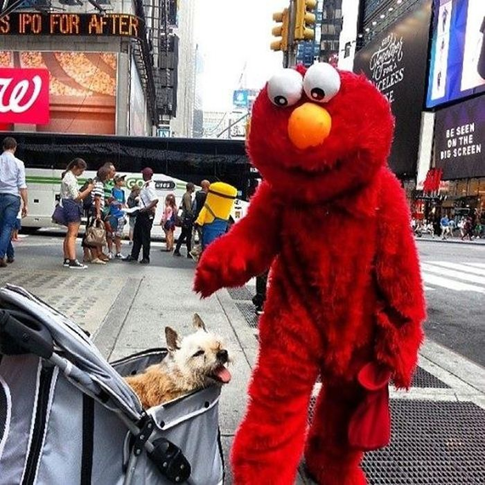 The Final Adventures Of Elmo (20 pics)