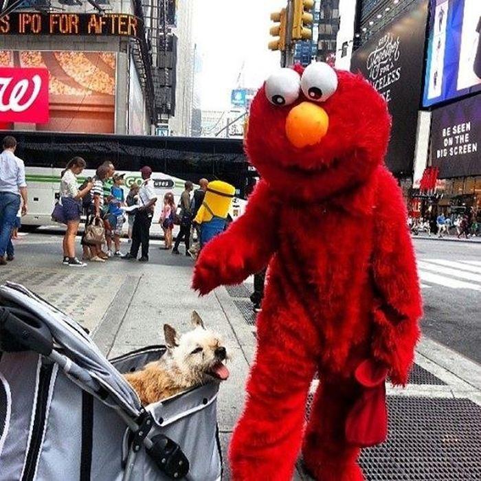 The Final Adventures Of Elmo (20 pics)