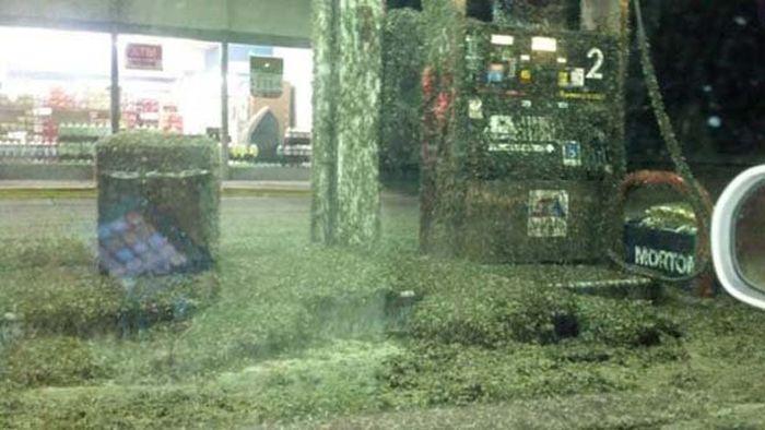 A Swarm Of Mayflies (5 pics)