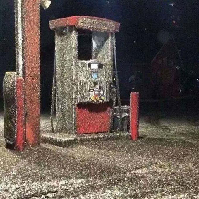 A Swarm Of Mayflies (5 pics)