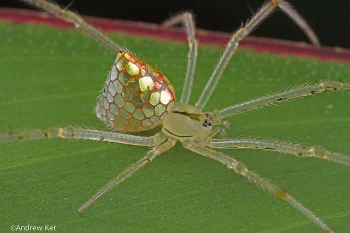 Are These Spiders Or Jewelry? (8 pics)