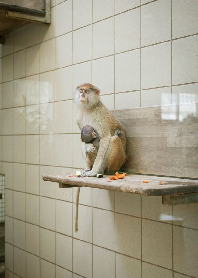 The Most Depressing Zoo Animals Ever (16 pics)