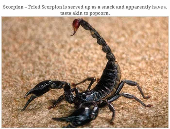 Disgusting Animals That People Eat For Dinner (17 pics)