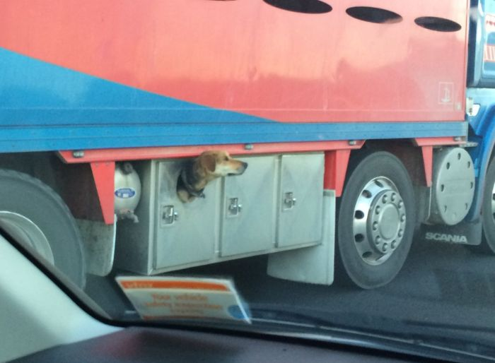 Dog Lives In Truck (3 pics)