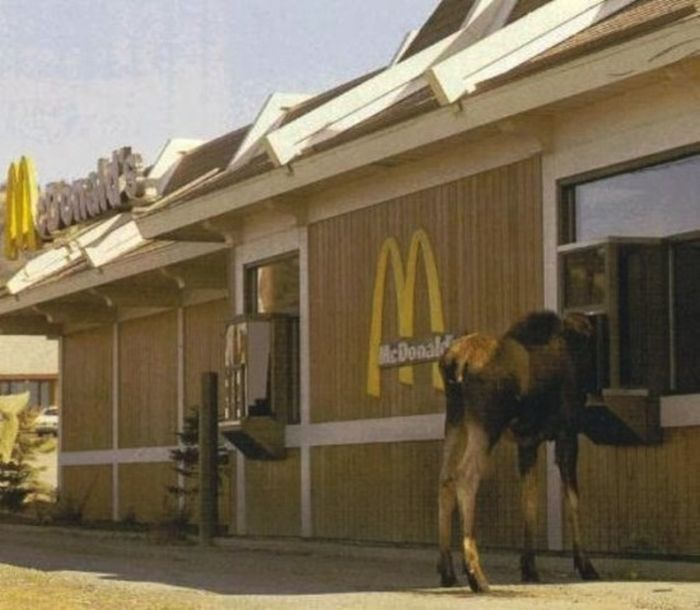 Things You Will Only See In Canada (34 pics)