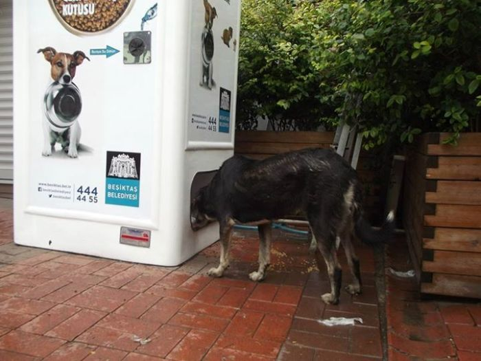 Amazing Machine Feeds Homeless Animals (8 pics)