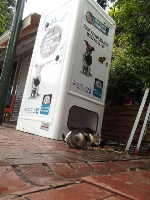 Amazing Machine Feeds Homeless Animals (8 pics)