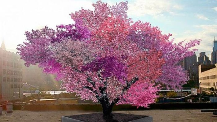 This Tree Can Produce 40 Different Kinds Of Fruits (8 pics)