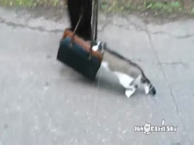 Cat Goes For A Walk For The First Time