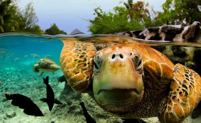 Bora Bora Is A Magical Place (31 pics)