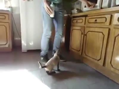 Bebek gibi süt içen kedi, Biberonla süt içen minik kedi