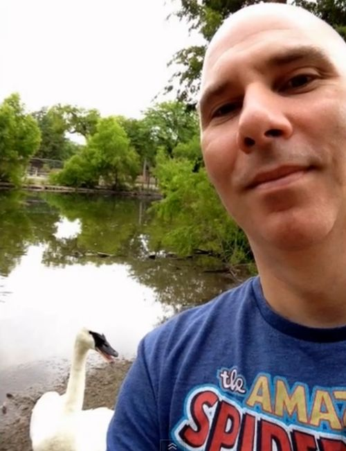 This Swan Photobombed A Selfie (2 pics)