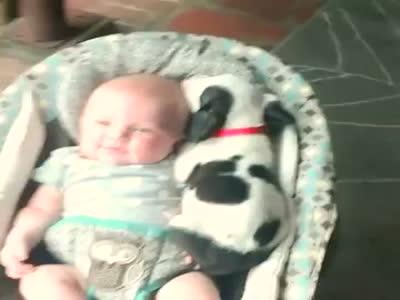 Bebek, köpek, video, komik
