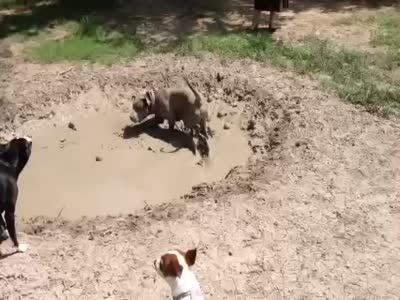 Puppy Likes To Play In Mud