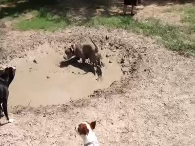 köpek videoları, çamur, yuvarlanan köpek, çamuru seven köpek, köpekler çamuru sever mi