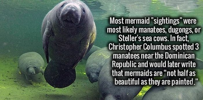 Fun Facts To Fire Up Your Brain (34 pics)