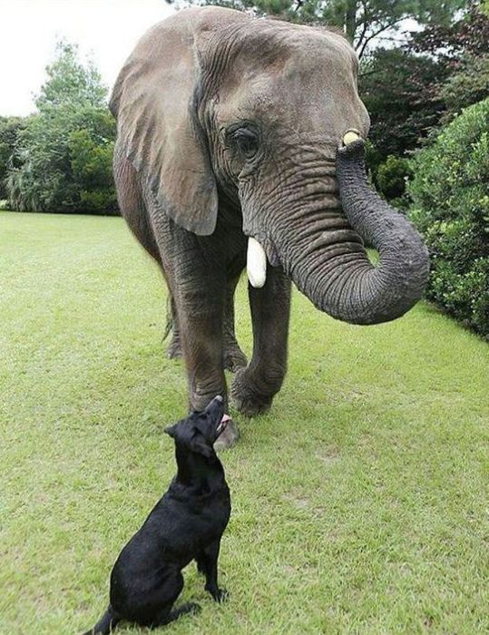 köpek, fil, arkadaşlık, dostluk