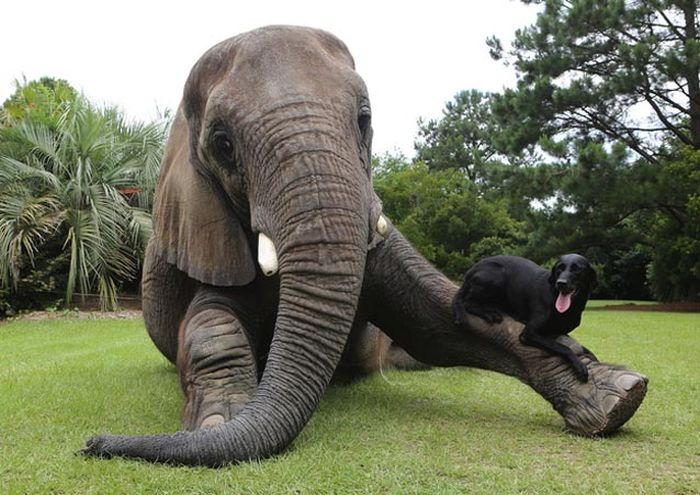 This Elephant and Dog Are Best Friends Forever (10 pics)