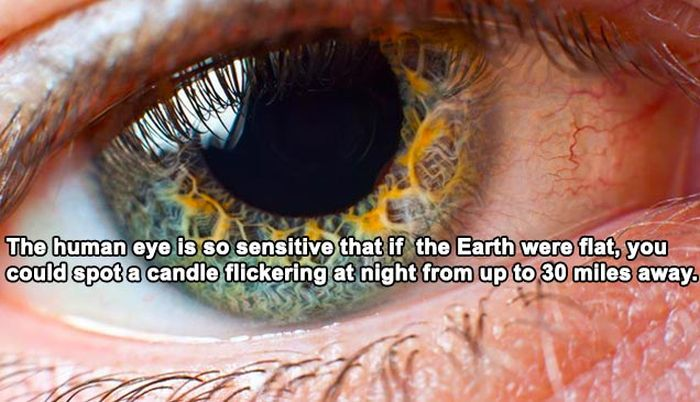 Facts You Didn't Know About The Human Body (19 pics)