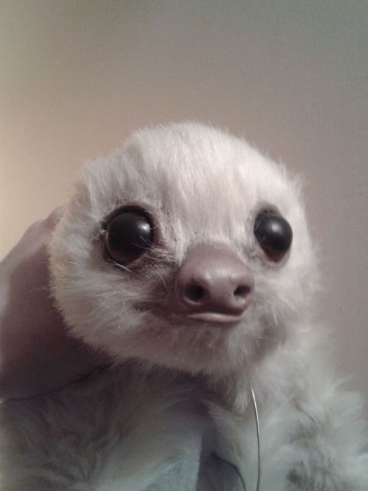 Fake Sloth That Looks So Real (19 pics)