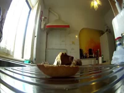 Dog Stealing Food