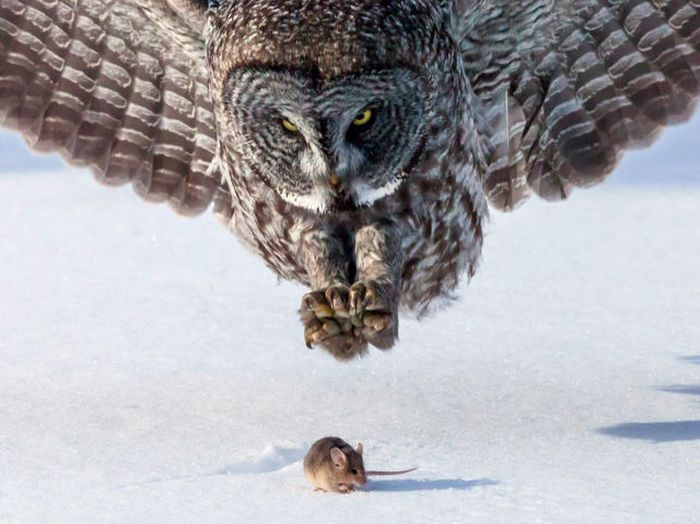 Perfectly Timed Wildlife Photos (48 pics)
