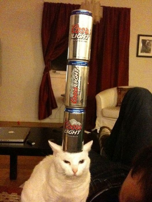 These Cats Could Really Care Less (23 pics)