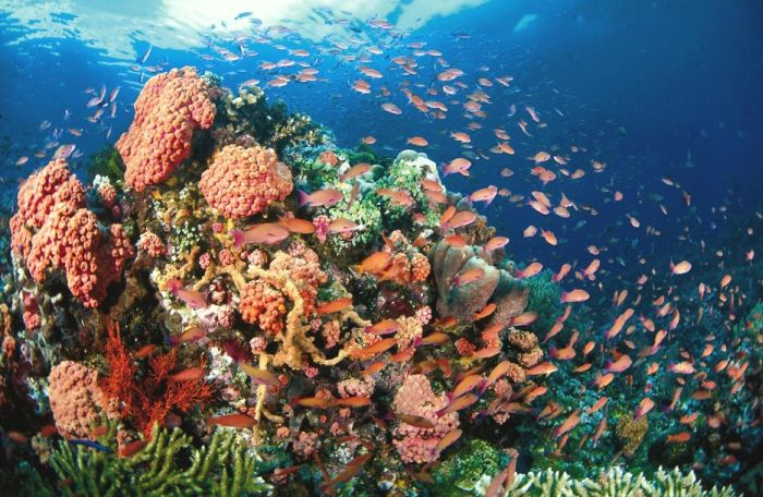 Amazing Pictures Of Beautiful Coral Reefs (39 pics)