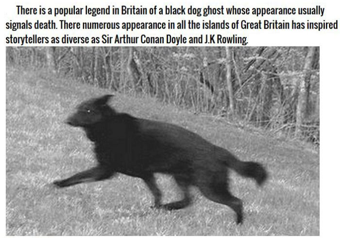 Terrifying Ghost Animals Across The Globe (8 pics)