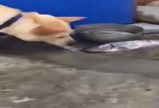 The Real Life Baywatch Dog
