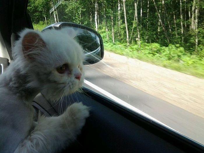 Amazing Rescued Cat Transformation (23 pics)