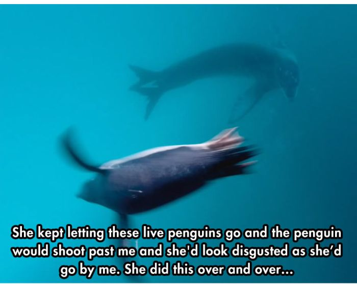 Photographer Comes Face To Face With A Leopard Seal (10 pics)