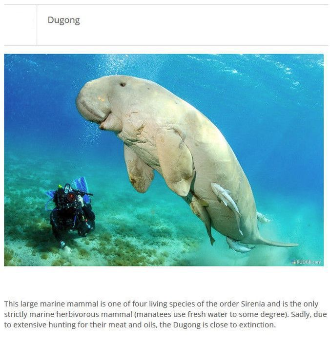 Strange Animals You Won't Believe Exist (25 pics)