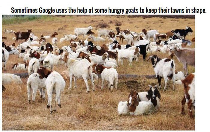 Google Facts Prove They Own The World (13 pics)